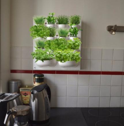 mur-de-plantes-aromatiques